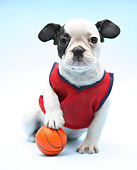 PUP 14 XA0019 01