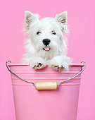 PUP 14 XA0020 01