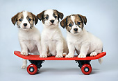 PUP 14 XA0021 01