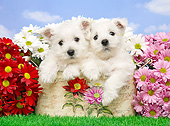PUP 14 XA0023 01