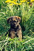 PUP 14 CE0001 01