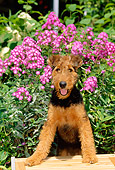 PUP 14 CE0008 01