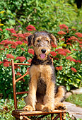 PUP 14 CE0013 01