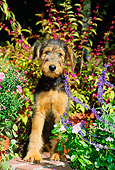 PUP 14 CE0021 01