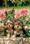 PUP 14 CE0032 01