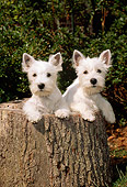 PUP 14 CE0035 01
