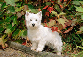 PUP 14 CE0036 01