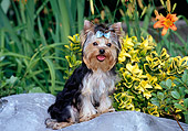 PUP 14 CE0040 01