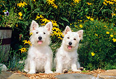 PUP 14 CE0041 01