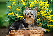 PUP 14 CE0042 01