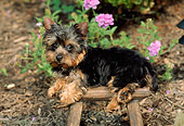 PUP 14 CE0043 01