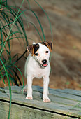 PUP 14 CE0048 01