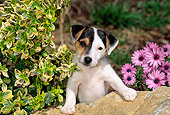 PUP 14 CE0049 01