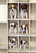 PUP 14 CE0050 01