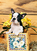 PUP 14 CE0052 01