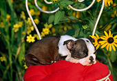 PUP 14 CE0053 01