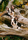 PUP 14 CE0056 01