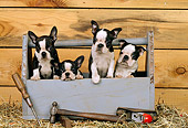 PUP 14 CE0063 01