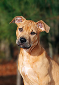 PUP 14 CE0069 01