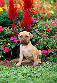 PUP 14 CE0070 01