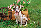 PUP 14 CE0071 01