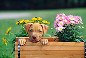 PUP 14 CE0072 01