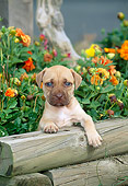 PUP 14 CE0073 01