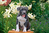 PUP 14 CE0075 01