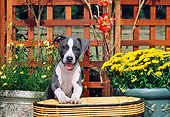 PUP 14 CE0076 01