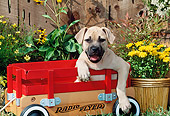 PUP 14 CE0077 01