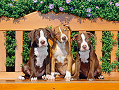 PUP 14 CE0079 01