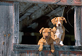 PUP 14 CE0082 01