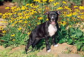 PUP 14 CE0083 01