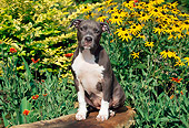 PUP 14 CE0084 01