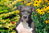 PUP 14 CE0085 01