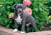 PUP 14 CE0087 01