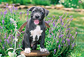 PUP 14 CE0088 01