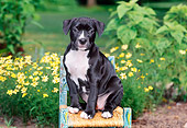 PUP 14 CE0089 01
