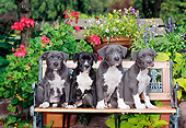 PUP 14 CE0090 01