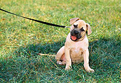 PUP 14 CE0092 01