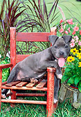 PUP 14 CE0095 01