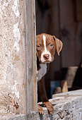 PUP 14 CE0098 01