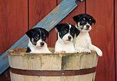 PUP 14 CE0101 01