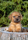 PUP 14 CE0104 01