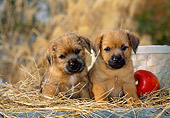 PUP 14 CE0106 01