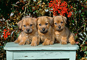 PUP 14 CE0107 01
