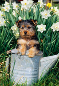 PUP 14 CE0108 01
