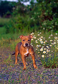 PUP 14 CE0110 01