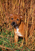 PUP 14 CE0111 01