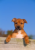 PUP 14 CE0112 01